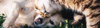ideal para criadores de perros y gatos que necesitan camas con calor